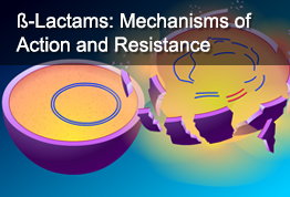 ß-Lactams: Mechanisms of Action and Resistance
