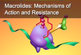 Macrolides: Mechanisms of Action and Resistance